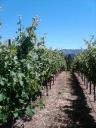 Baconbrook Vineyard