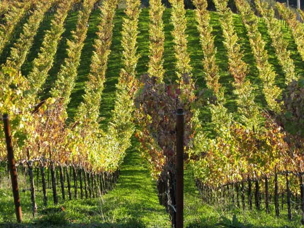 baconbrookautumn Match Vineyards Update